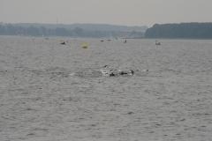 Præstøfjord svøm.2012_fotoVivian Berg - 78